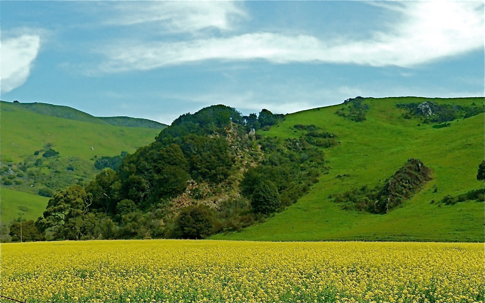 Mustard agains hill on ranchland of San Luis Obispo County