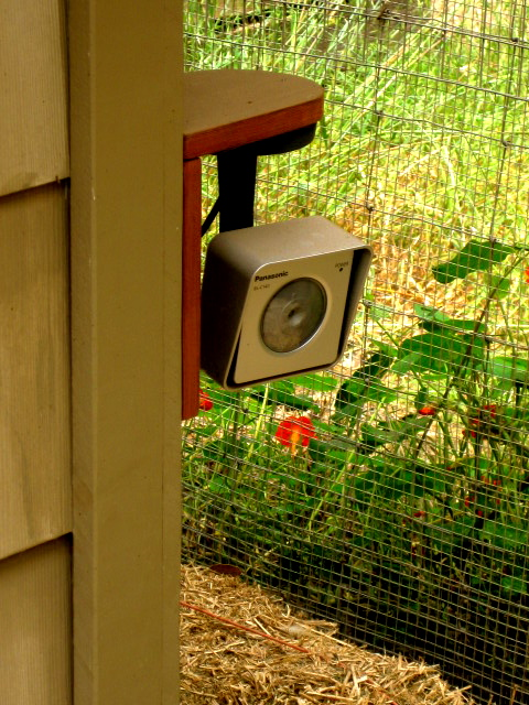 Outside camera attached to henhouse.