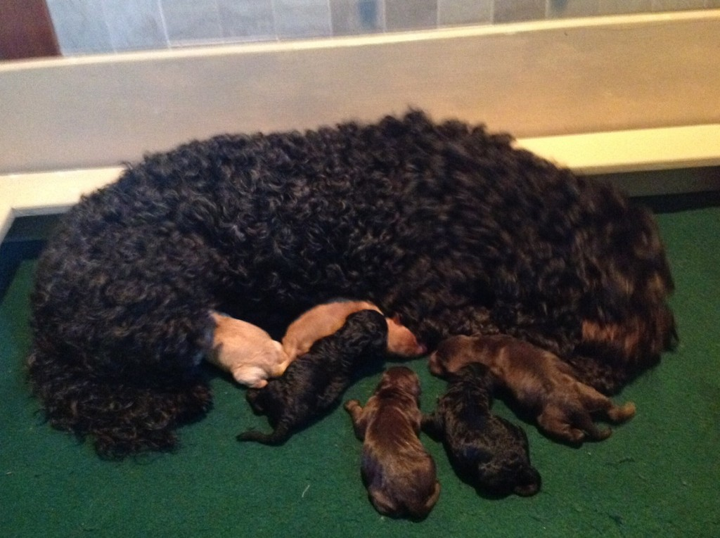 Mattie with brand new puppies. Sept. 1, 2014