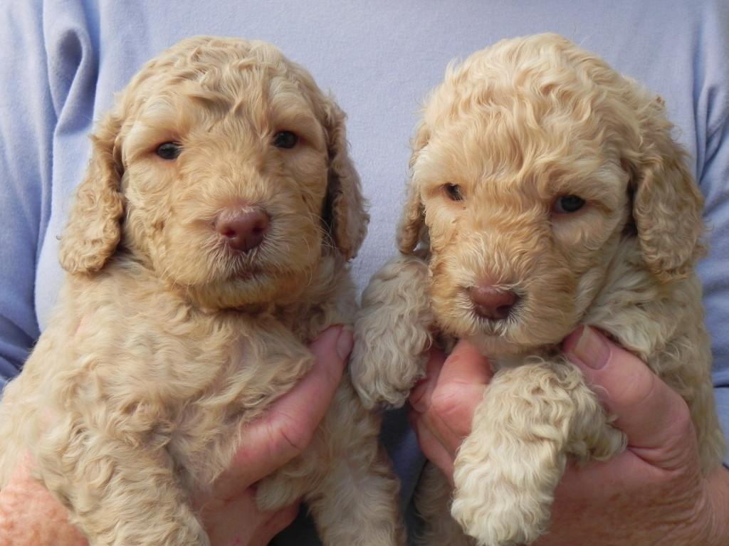 Lulu & Lacey