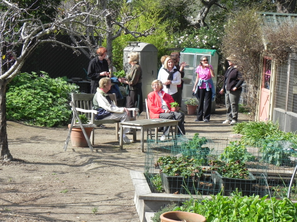 Members of the Newcomers Garden Club viewing our garden.