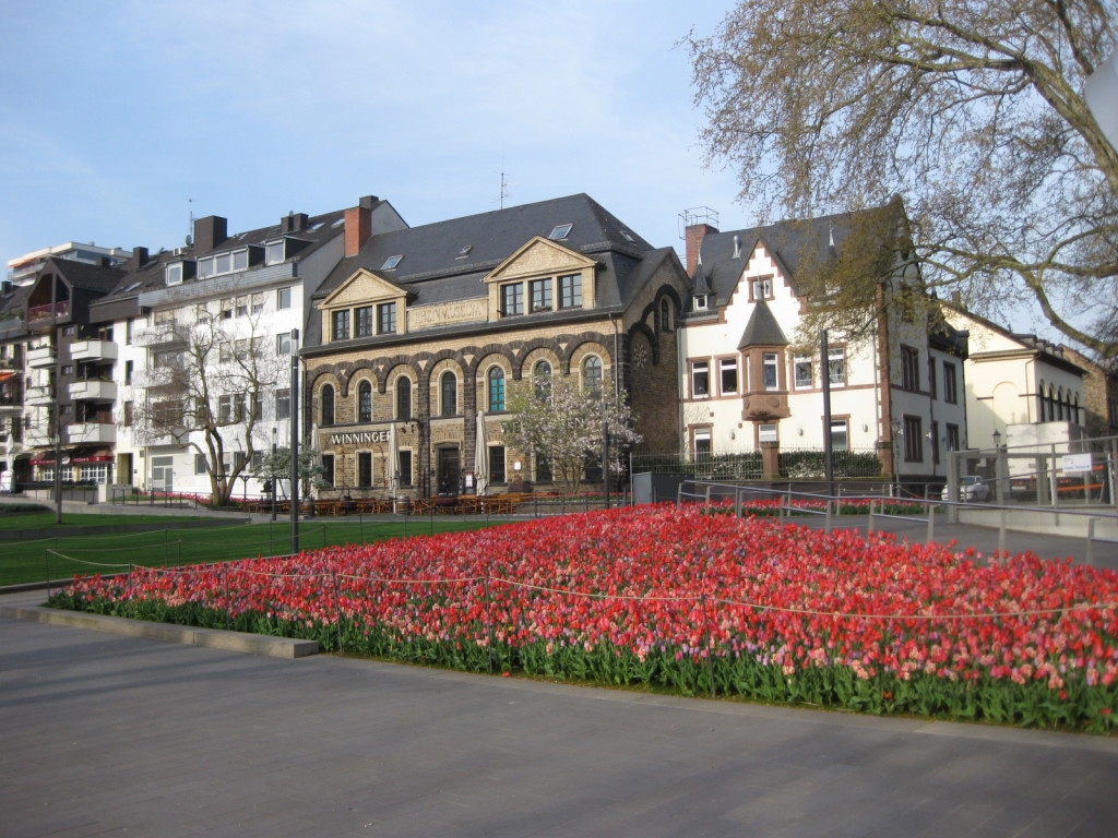 Tulips blooming outside of residences in Amsterdam.