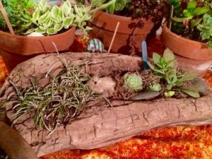 Succulents planted in driftwood.