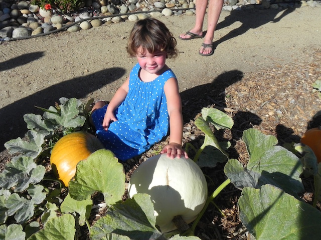 A neighbor admires a big white pumpkin.