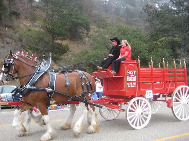 Clydesdale horse, raised on a nearby ranch, follow the Main Street path of the Cambria Pinedorado Parade.
