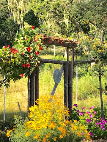 Simple arbor supports fast-growing coral passion vine.