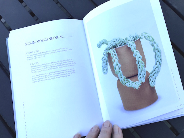 """Page 154-155 in Gynelle Leon's book """"Prick"""". Pages feature Sedum Morganianum."""