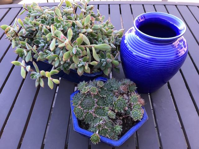 Little arrangements of succulents in pots can lend color to a garden.